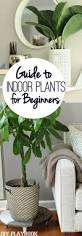 Easy To Care For Indoor Plants The Best Indoor Plants And How To Keep Them Alive And Thriving