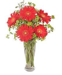 florist augusta ga ritzy gerberas flower arrangement in augusta ga s