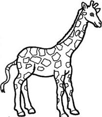 giraffe coloring pages coloringmates doodly doo fontaroo