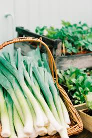 how to grow leeks in the home vegetable garden
