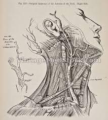 vintage medical stock photos antique illustrations images