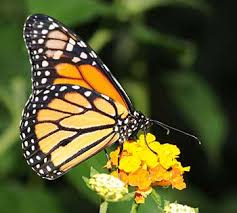 butterfly wings nature to learn about flight