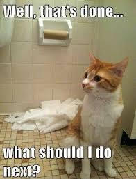 Cute Kitten Memes - what next cat jpg