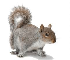 ground squirrels identification 6 common types u0026 6 ways to get