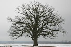 3quarksdaily a tree in winter