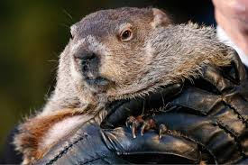 washington post op ed groundhog day is silly but as a scientist