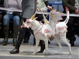 Gargoyle Costume Gargoyle Dog Trick Or Treat Pinterest Dog