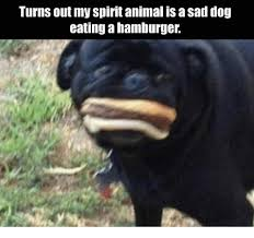 Sad Animal Memes - turns out my spirit animal is a sad dog eating a hamburger