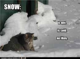 Hate Snow Meme - i hate snow catattiude pinterest snow and humor