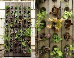 topfpflanzen balkon balkon pflanzen senkrechte bepflanzung outdoor inspiration
