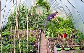 polytunnel superpower for your veg telegraph