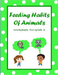 carnivores herbivores u0026 omnivores food chain u0026 animal feeding
