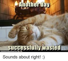 Wasted Meme - anotherday successfully wasted tcanthrscheezeurgercom sounds about