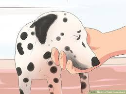 3 ways train dalmatians wikihow