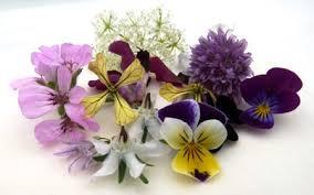 Edible Flowers Edible Flowers Packet Jackie Leonard U0026 Sons Ltd