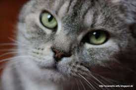 Katze Schlafzimmer Ja Bett Nein Noch Ein Make Up Blog Katzen