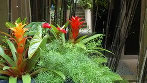 Tropical Plants For Garden - how to repot tropical plants garden guides