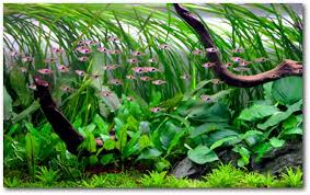 How To Aquascape A Planted Tank Setting Up A Higher Tech Planted Tank Uk Aquatic Plant Society