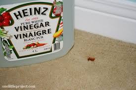 How To Remove Rug Stains How To Remove Rust Stains From Carpet