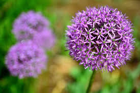 Bee Deterrent For Patio 12 Plants That Repel Unwanted Insects Mnn Mother Nature Network