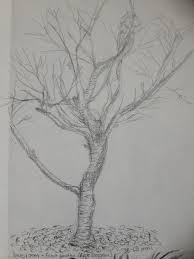 sketching individual trees u2013 drawing skills