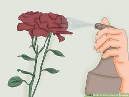 ants peonies 4 steps pictures wikihow