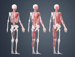A Anatomy 10 Ways To Improve Your Human Anatomy Modelling Creative Bloq