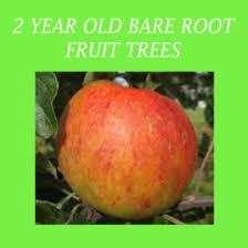 Online Fruit Trees For Sale - irish fruit trees for sale online archives clarenbridge garden