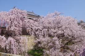 a beautiful spring day in ueda u2013 go nagano