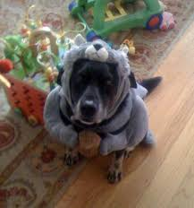 squirrel halloween costume for dogs the halloween