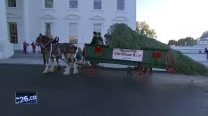 melania trump takes custody of white house christmas tree nbc26