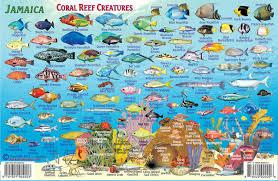 jamaica dive map u0026 coral reef creatures guide franko maps