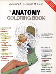 el extranjero blog archive the anatomy coloring book by wynn