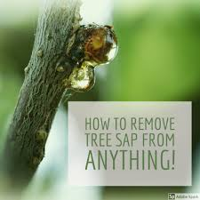 how to remove sticky tree sap or pine pitch from almost anything