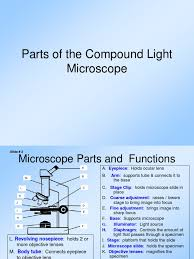 compound light microscope parts and functions parts of the compound light microscope lens optics optical devices
