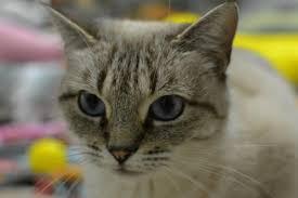 Blind Cat Sanctuary Blind Cat Rescue U0026 Sanctuary Inc