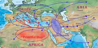 Map Of The Mediterranean Sighthounds And Primitive Dogs In Italy And The Mediterranean