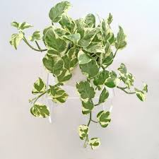 9 low risk high reward indoor plants u2014 swansons nursery