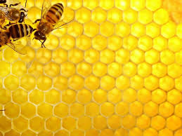 edible honeycomb is the honeycomb from a beehive edible shea butter philippines