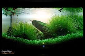 Aquascape Design How To Make Aquascape With Simple Design House Design And