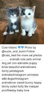Cute Kitten Memes - 25 best memes about cute kitten cute kitten memes