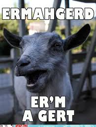 Ermahgerd Animal Memes - untitled cheezburger funny memes funny pictures