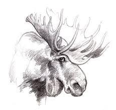 magellin blog a moose