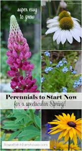 best 25 fall flower gardens ideas on pinterest fall blooming
