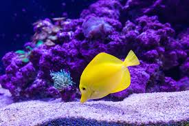 thanksgiving reefs coral reef fish pictures free images on unsplash