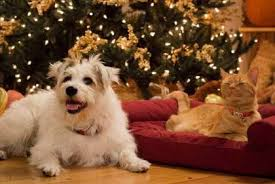 thanksgiving foods toxic to pets