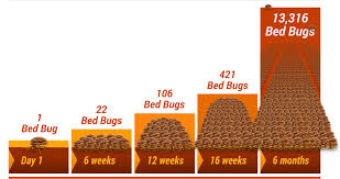 Bed Bug Denver How Do You Get Bed Bugs Removed U0026 Disposed Thermal Clean