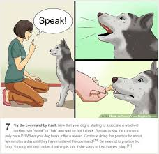 Know Your Meme Dog - wikihow dog training know your meme