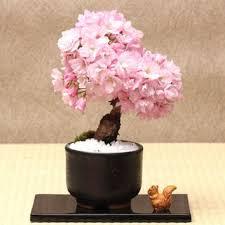 cherry blossom decor shop japanese cherry blossom decor on wanelo