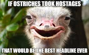 Ostrich Meme - ostrich imgflip